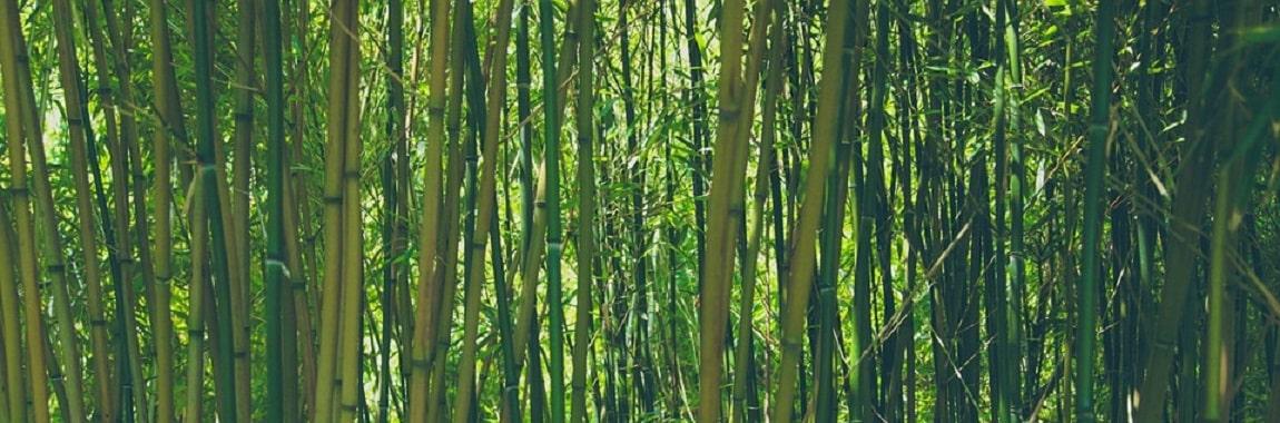 bamboo-banner-min