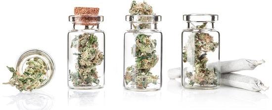 Infiorescenze-Cannabis-Legale-Vivere-la-Canapa-Light